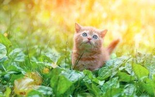 Рецепты лечения кошек пищевой содой от бывалых владельцев