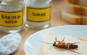 Чем поможет сода от муравьёв в квартире: как избавиться от колонии насекомых