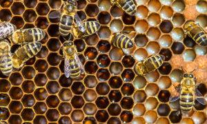 Сода для пчел: лечение и профилактика заболеваний, дезинфекция ульев и рамок