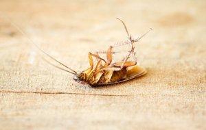 Как избавиться от тараканов с помощью соды: лайфхаки домохозяек