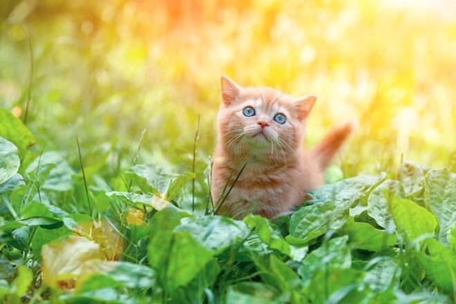Рыжий котёнок в саду