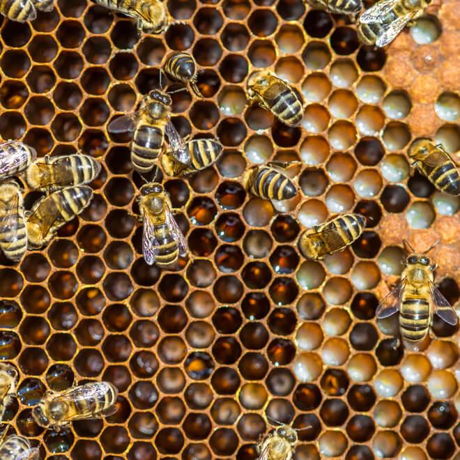 сода для лечения пчел